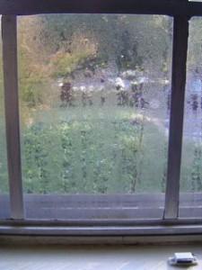 Co dělat když se v bytě rosí okna
