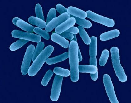 Jak na bakterie Legionella