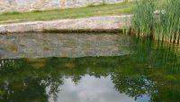 Kořenová čistička: úprava vody na bázi přírodních zákonů