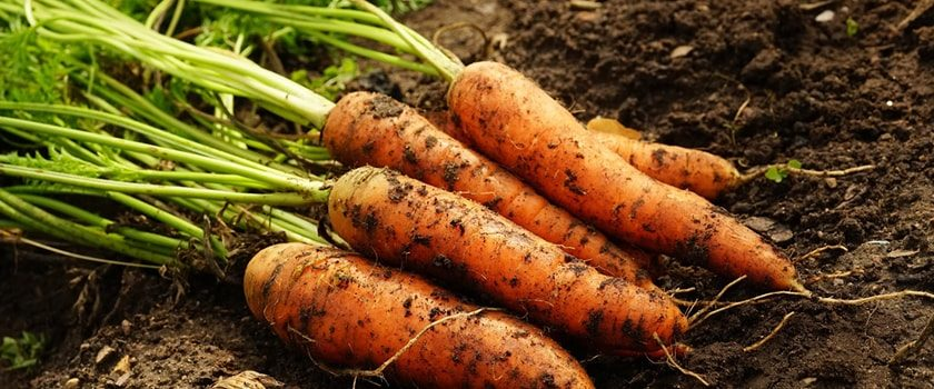 Jak správně hnojit zahradu